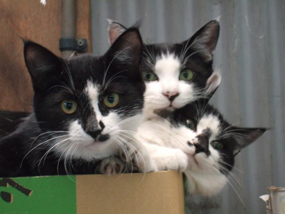 3 cats in a box