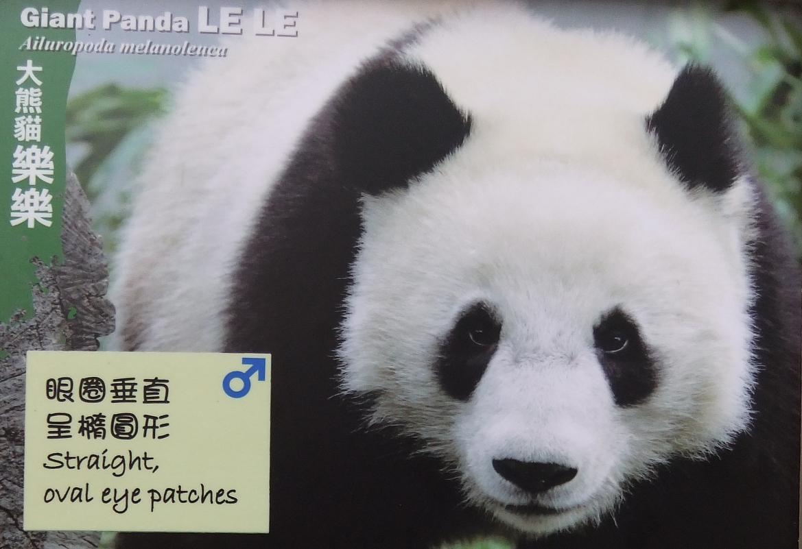 Giant Panda Le Le